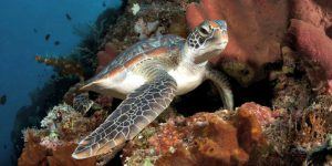 Venture Up Turtle Dive