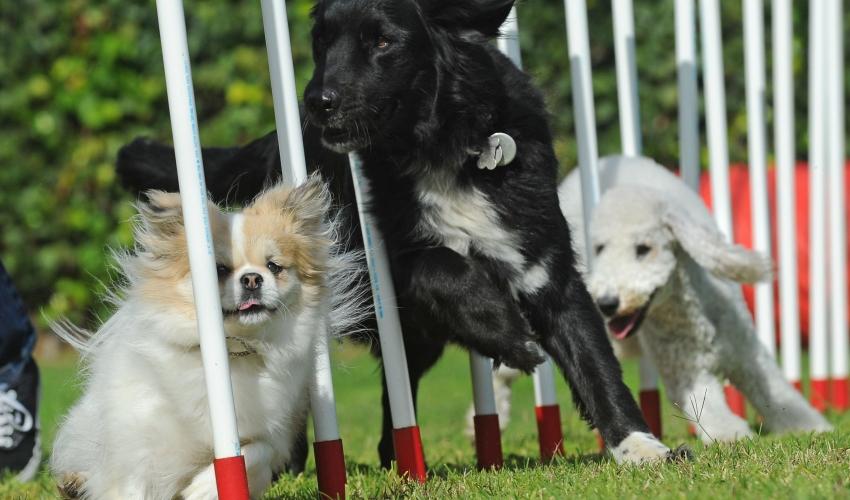 Venture Up Dog Agility team Team Building